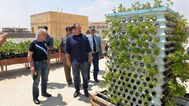 بنك الطعام يطلق مبادرة لزراعة الأسطح بدلا من الكراكيب